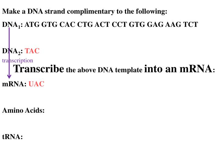 Make a DNA strand complimentary to the following: