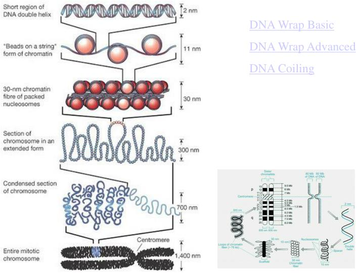 DNA Wrap Basic