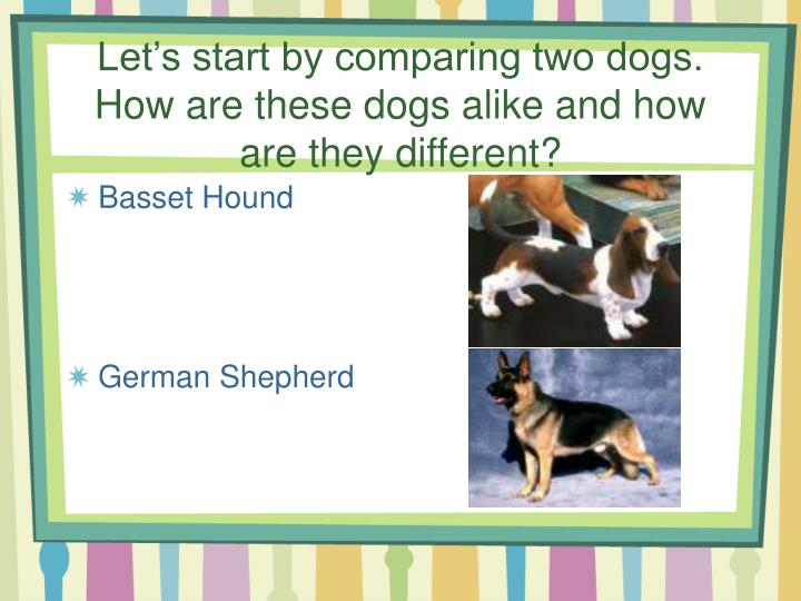 Let s start by comparing two dogs how are these dogs alike and how are they different