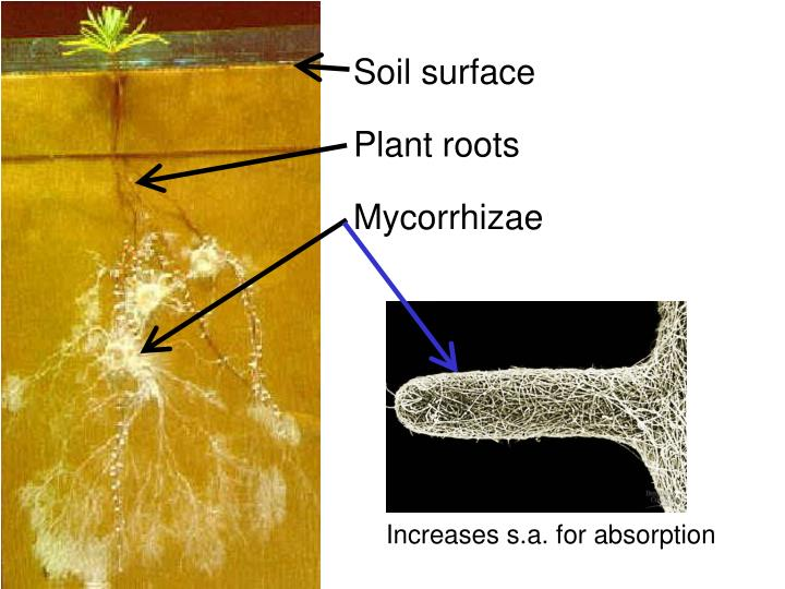 Soil surface