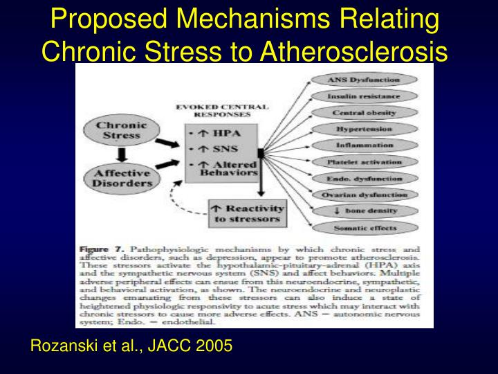 Proposed mechanisms relating chronic stress to atherosclerosis