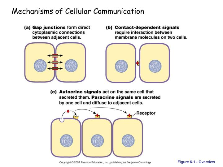 Mechanisms of Cellular Communication
