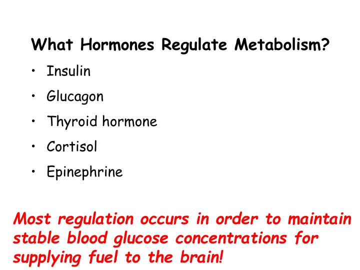 What Hormones Regulate Metabolism?