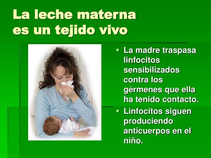 La leche materna