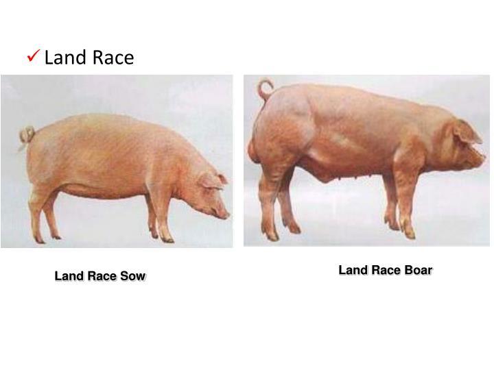 Land Race