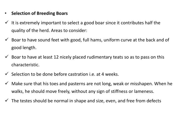 Selection of Breeding Boars