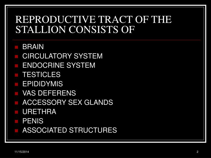 Reproductive tract of the stallion consists of