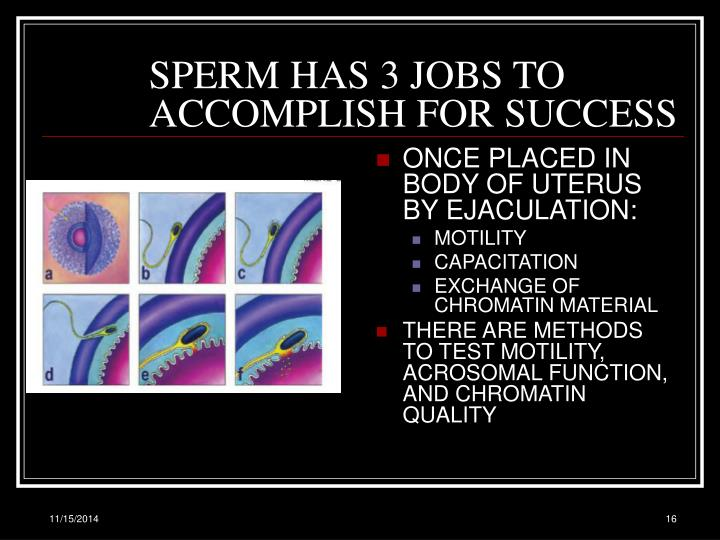 SPERM HAS 3 JOBS TO ACCOMPLISH FOR SUCCESS