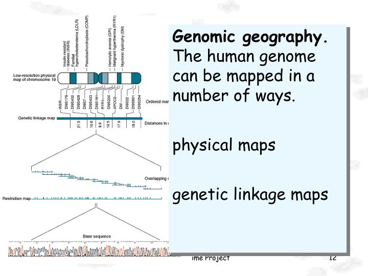 Genomic geography.