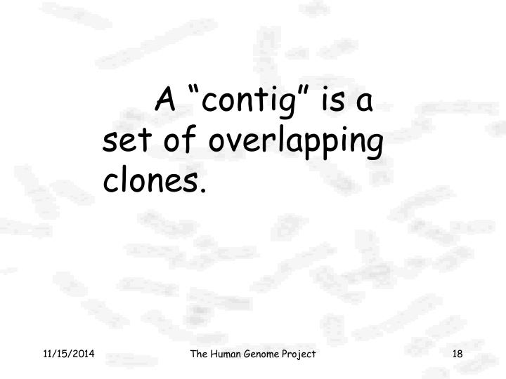 "A ""contig"" is a set of overlapping clones."
