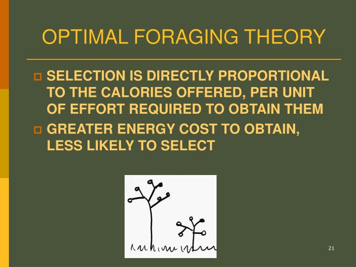 OPTIMAL FORAGING THEORY