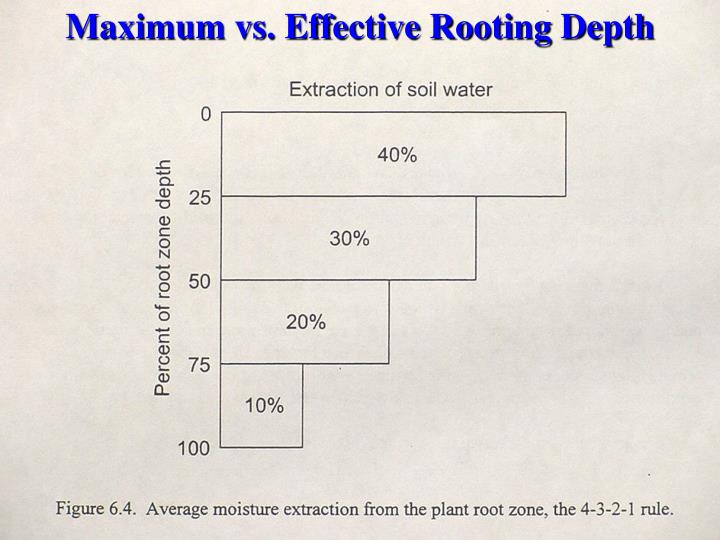 Maximum vs. Effective Rooting Depth