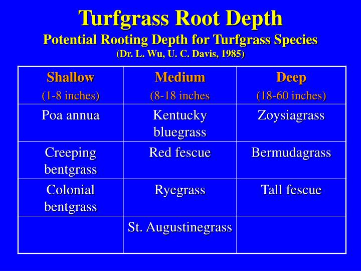 Turfgrass Root Depth