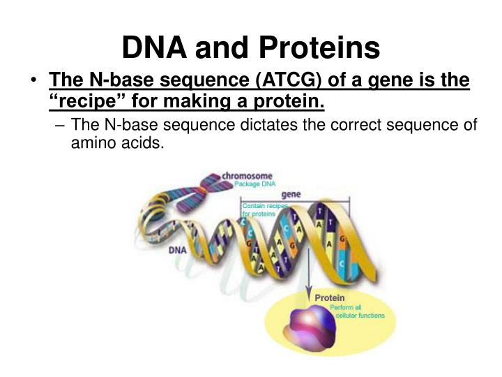 DNA and Proteins