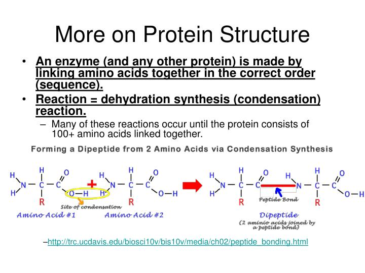 More on Protein Structure