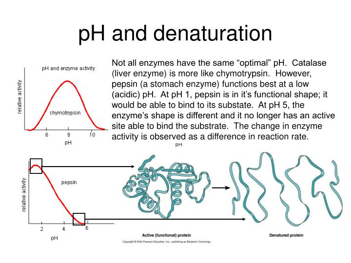 pH and denaturation