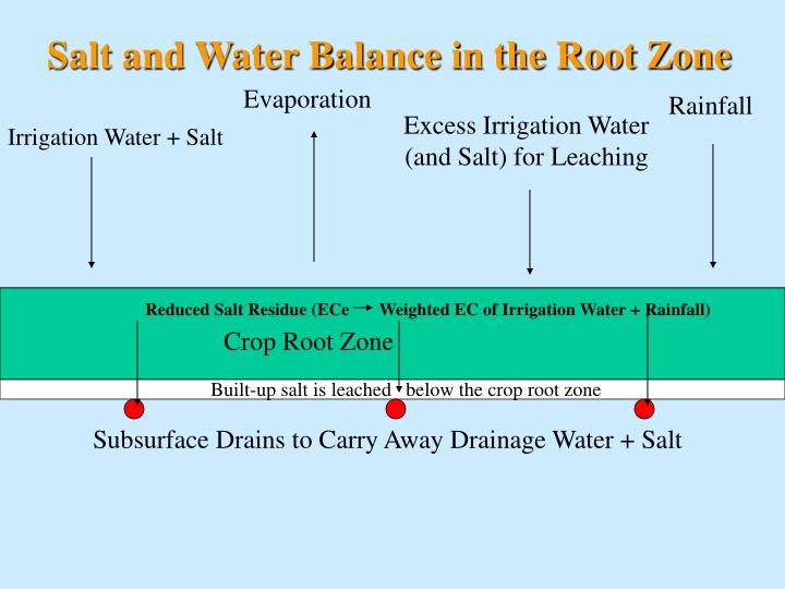 Salt and Water Balance in the Root Zone