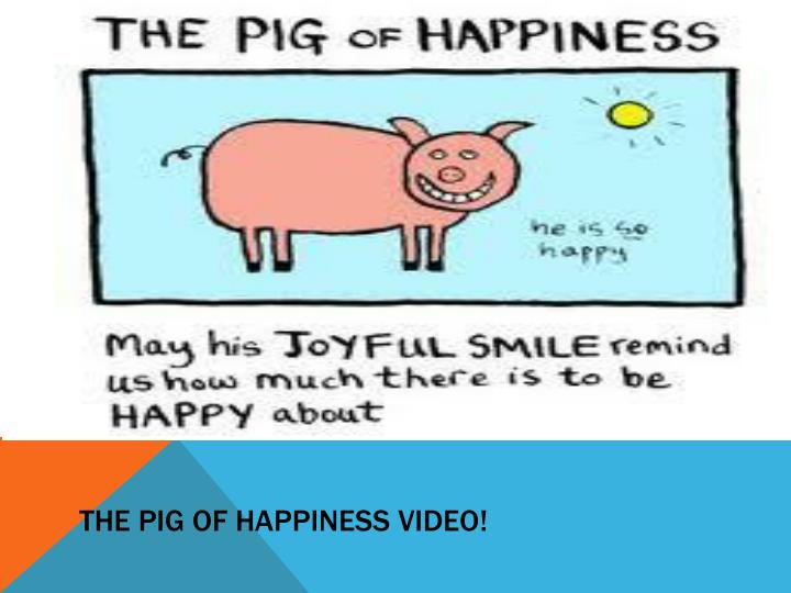 The pig of happiness video!
