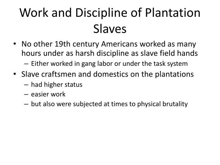 Work and Discipline of Plantation Slaves