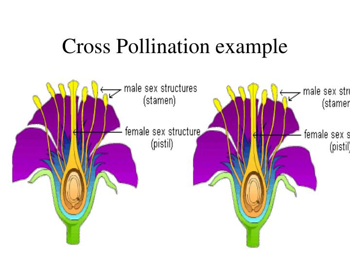 Cross Pollination example