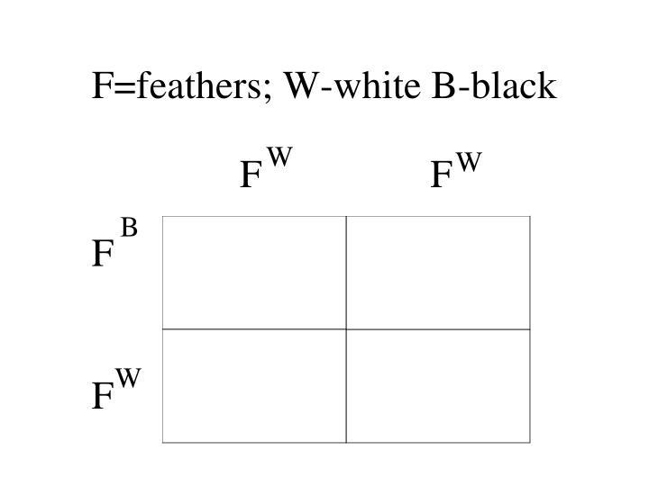F=feathers; W-white B-black
