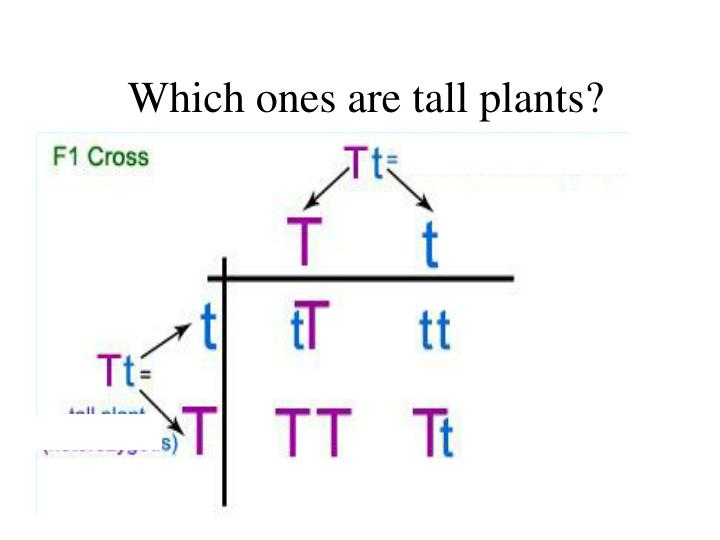 Which ones are tall plants?