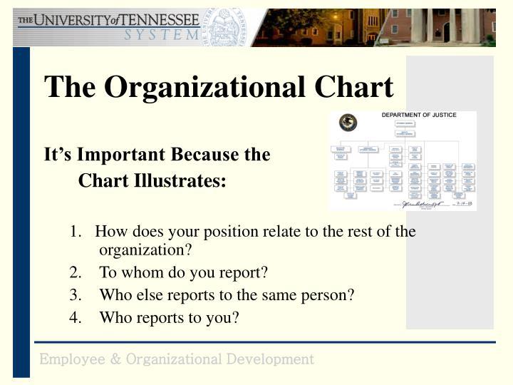 The Organizational Chart