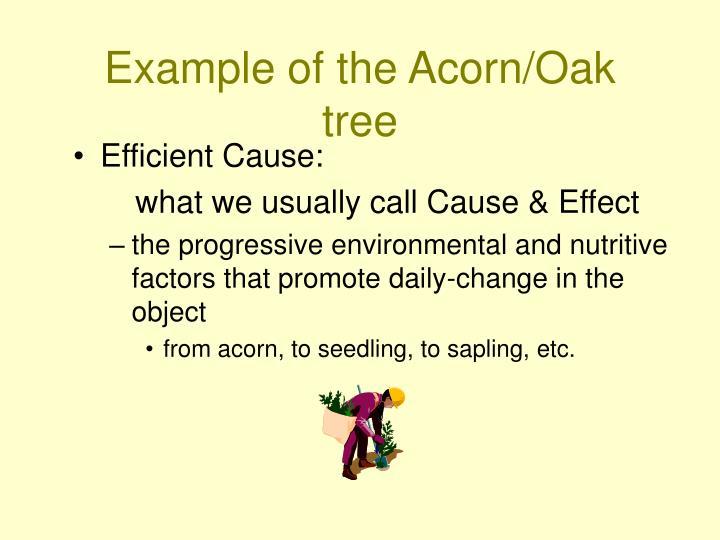 Efficient Cause: