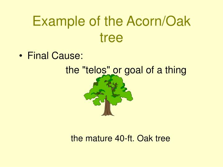 Example of the Acorn/Oak tree