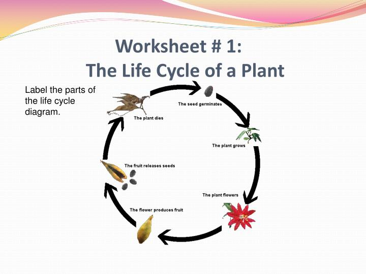 ppt the life cycle of plants mst unit powerpoint presentation id 6669760. Black Bedroom Furniture Sets. Home Design Ideas