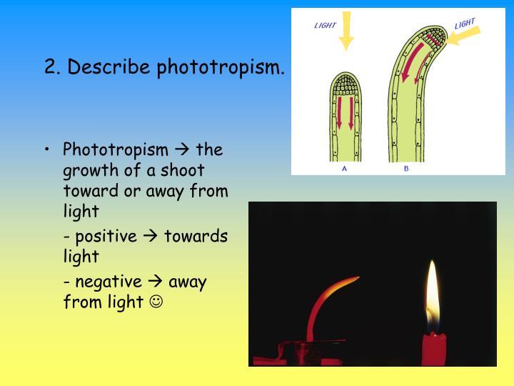 2. Describe phototropism.
