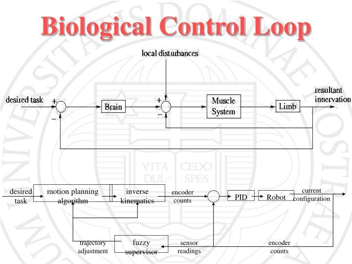 Biological Control Loop