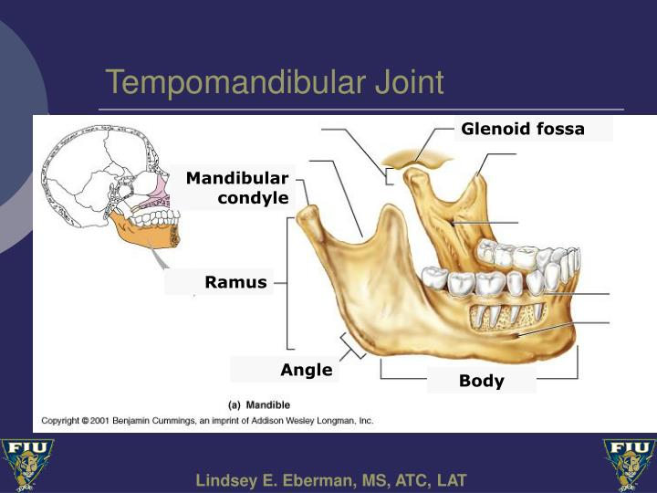 Tempomandibular Joint