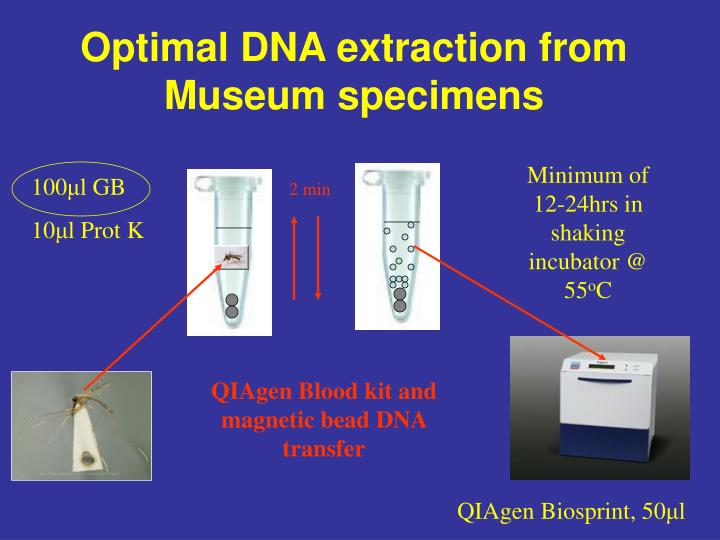 Optimal DNA extraction from Museum specimens
