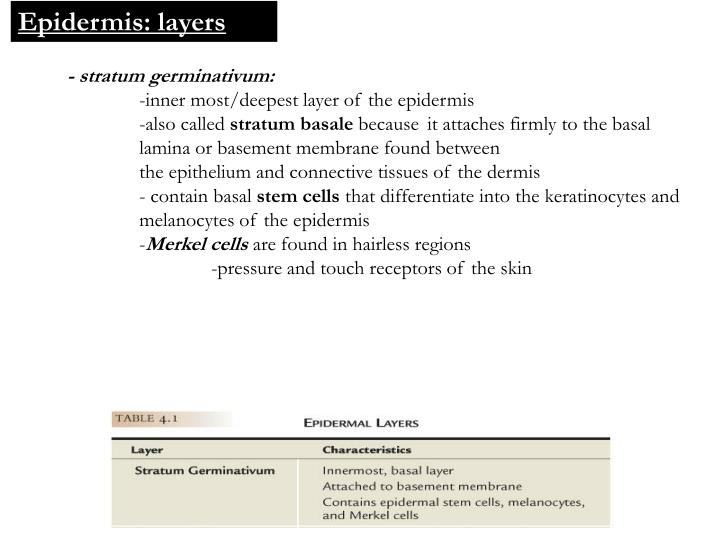 Epidermis: layers