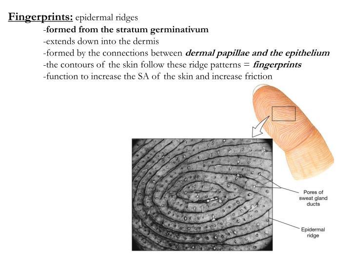 Fingerprints: