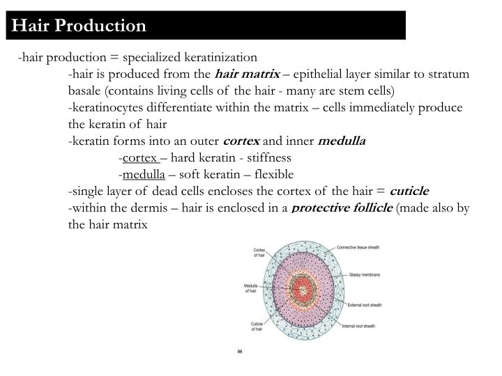 Hair Production