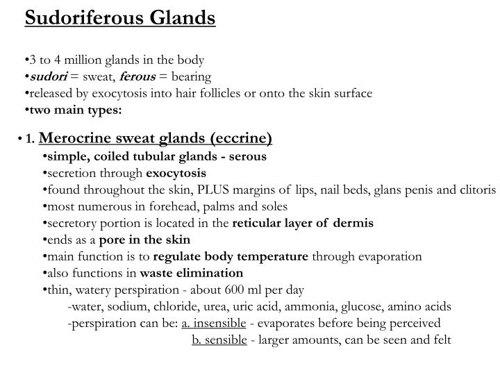 Sudoriferous Glands