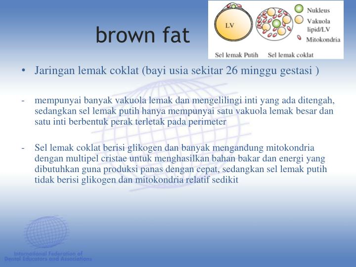 brown fat