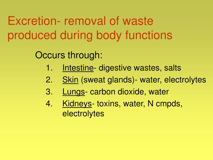 Excretion- removal of waste produced during body functions
