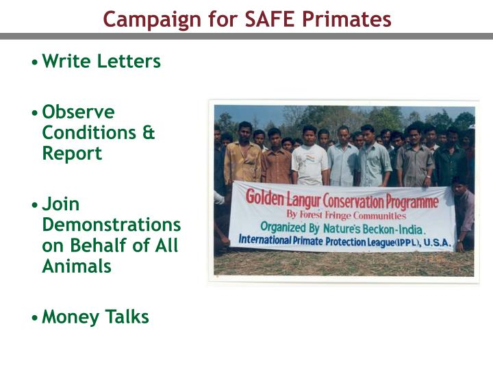 Campaign for SAFE Primates