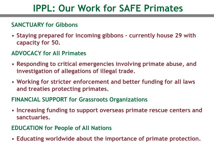 IPPL: Our Work for SAFE Primates
