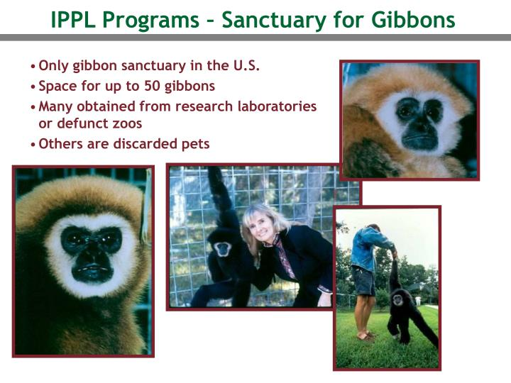 IPPL Programs – Sanctuary for Gibbons