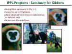 ippl programs sanctuary for gibbons