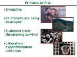 primates at risk