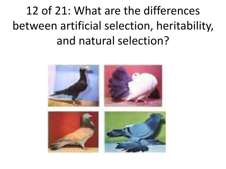 12 of 21: What are the differences between artificial selection, heritability, and natural selection?