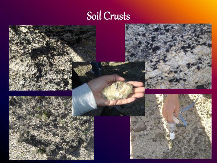 Soil Crusts