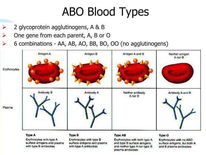 ABO Blood Types