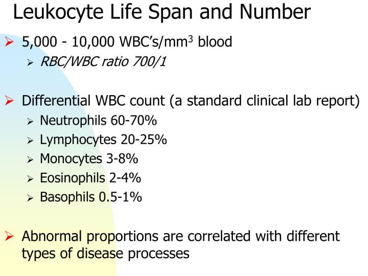 Leukocyte Life Span and Number
