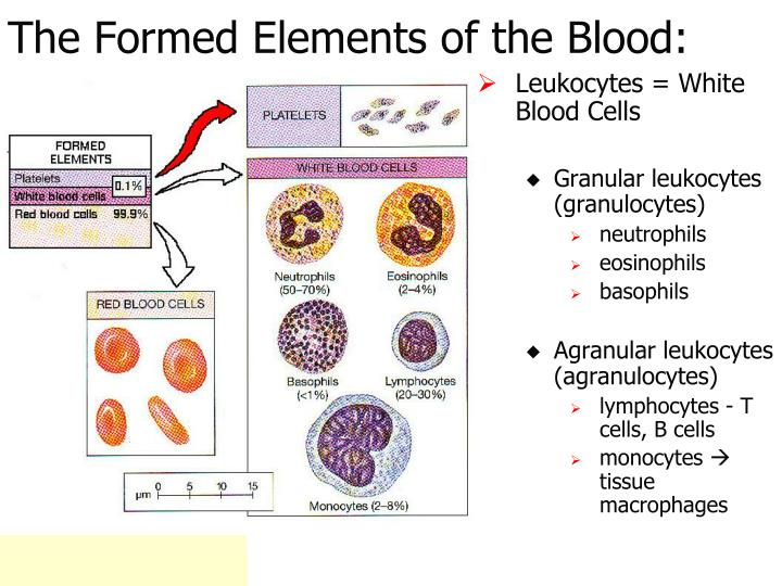 The Formed Elements of the Blood: